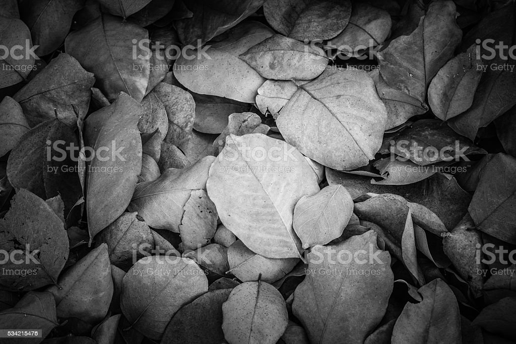 Dead leaves for backgrounds and textures,Black and white tone stock photo