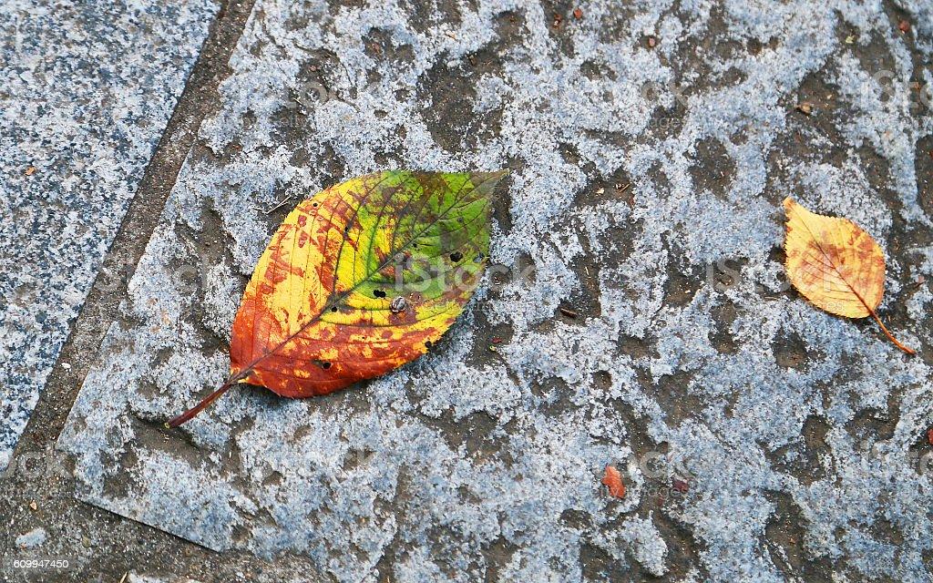 Dead leaves of the stone pavement foto de stock libre de derechos