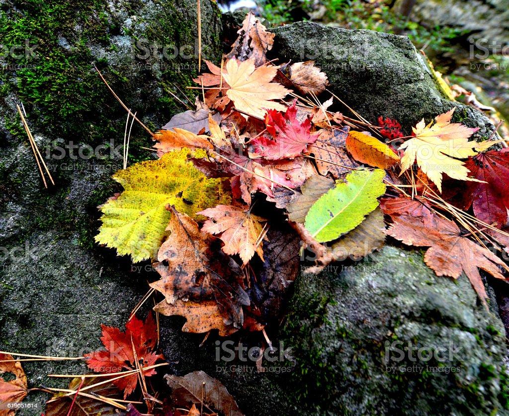 dead hojas  foto de stock libre de derechos