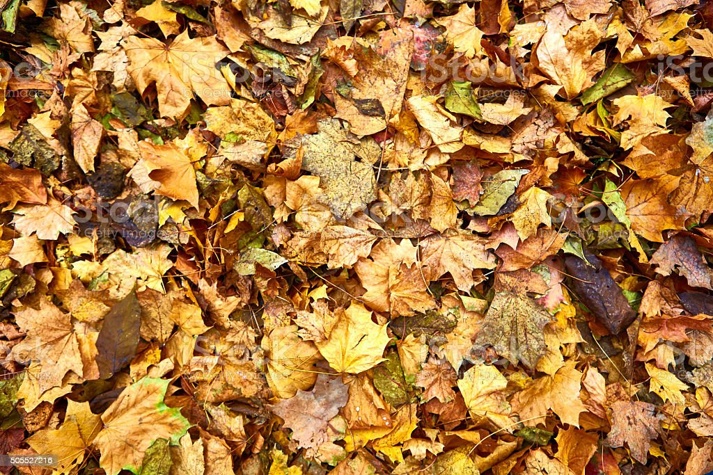 Dead leaves shot ideal for backgrounds stock photo