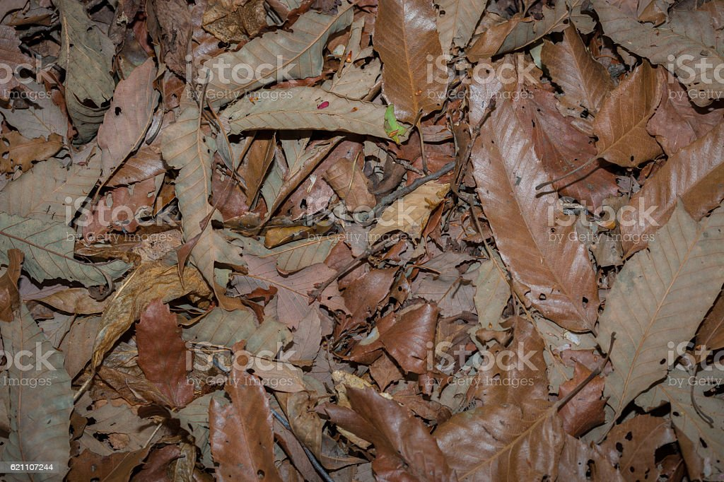 Dead leaves shot ideal for backgrounds textures stock photo