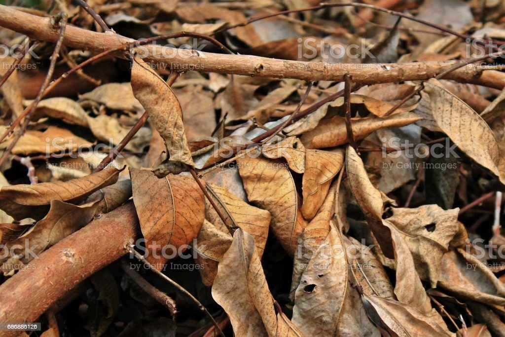 Dead leaves stacked on the floor. stock photo
