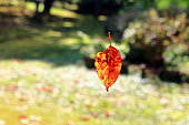 Dead leaves that fall