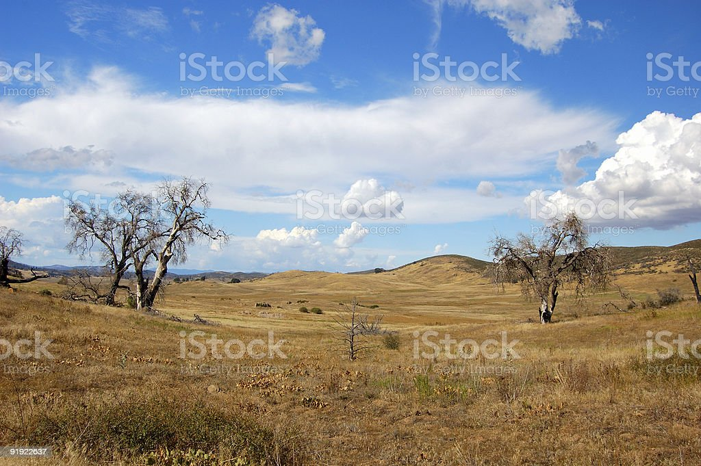 Dead Meadow royalty-free stock photo