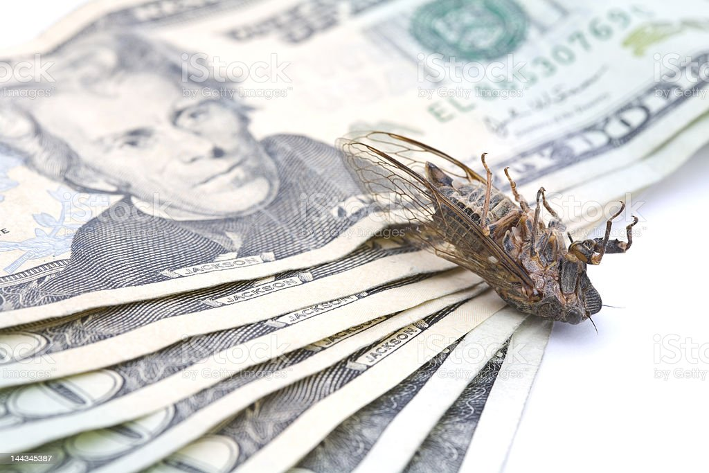 Dead Money Bug royalty-free stock photo