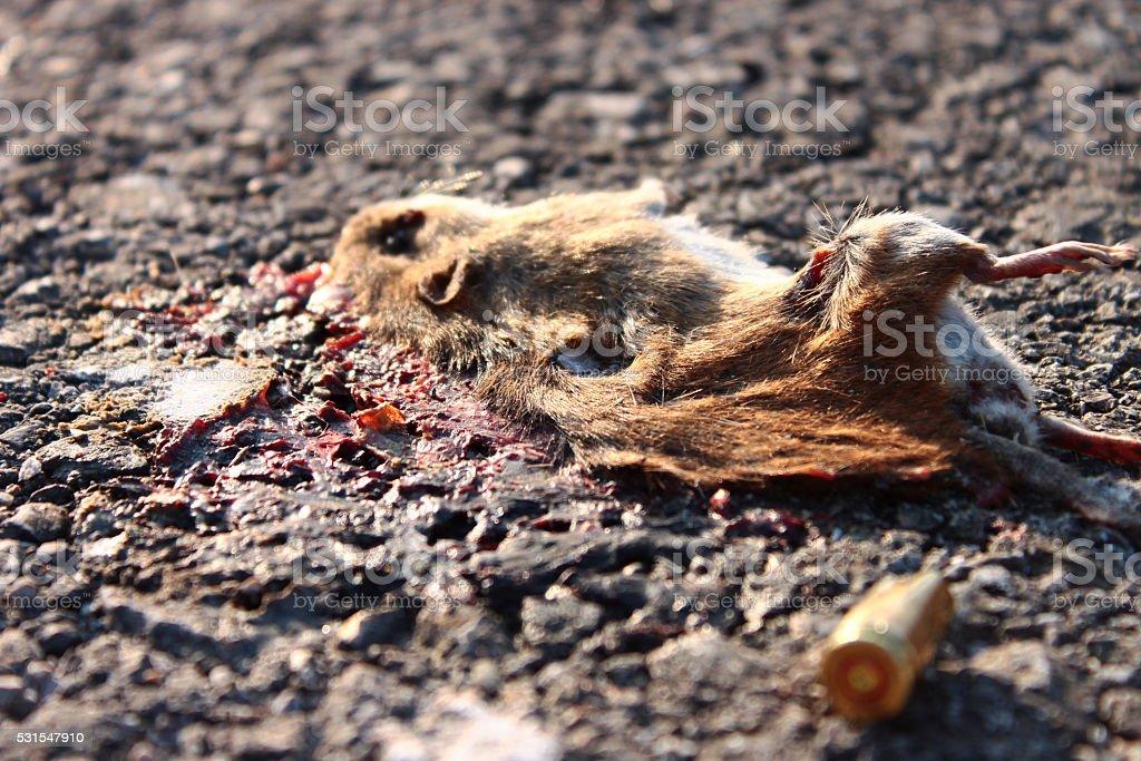 Dead mouse on asphalt stock photo