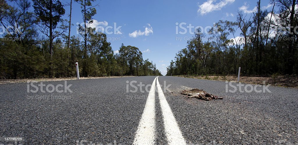 Dead on the road stock photo