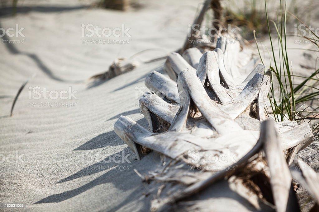 Dead palm on the John U. Lloyd State Park stock photo