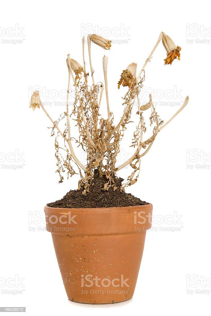 Dead Plant stock photo