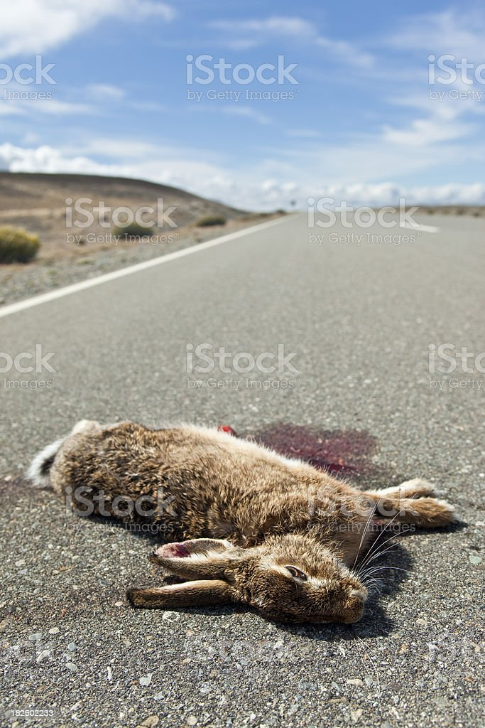 Dead rabbit on empty highway royalty-free stock photo