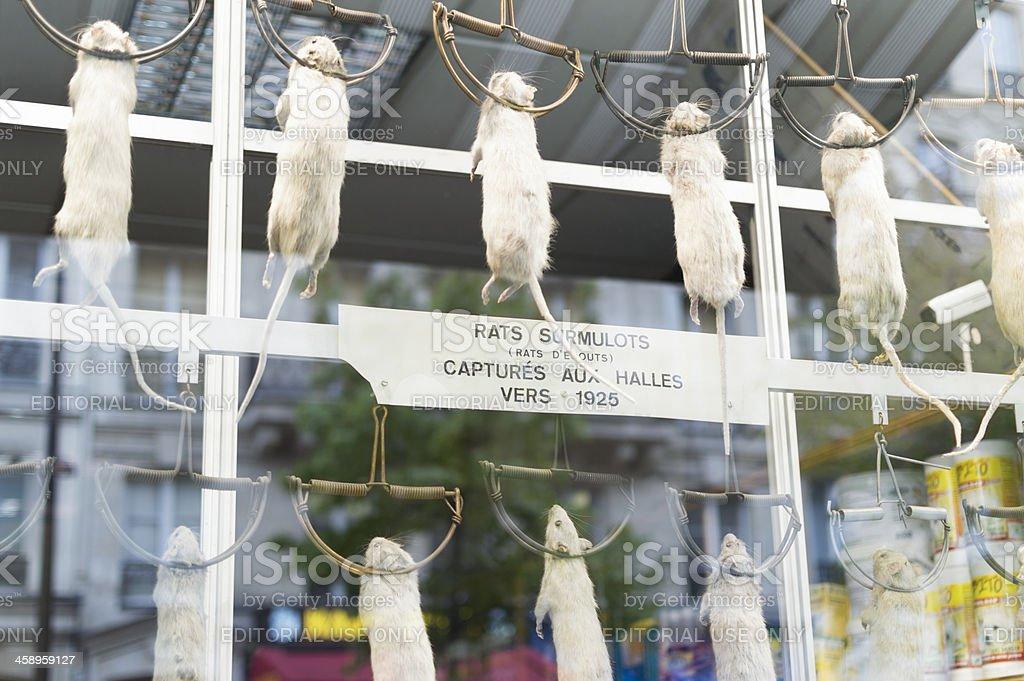 dead rats in famous Paris shop window stock photo