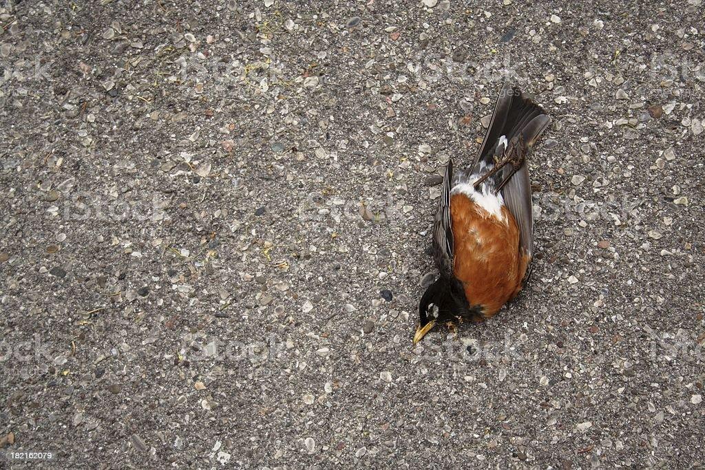 Dead Robin stock photo