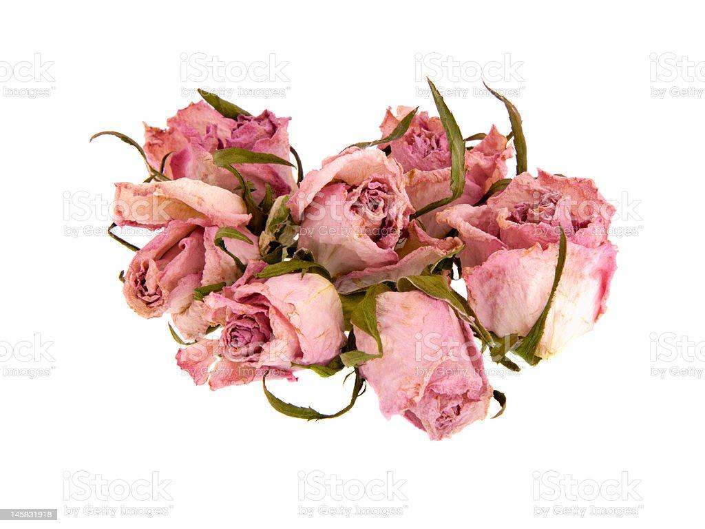 Dead Rosebuds royalty-free stock photo