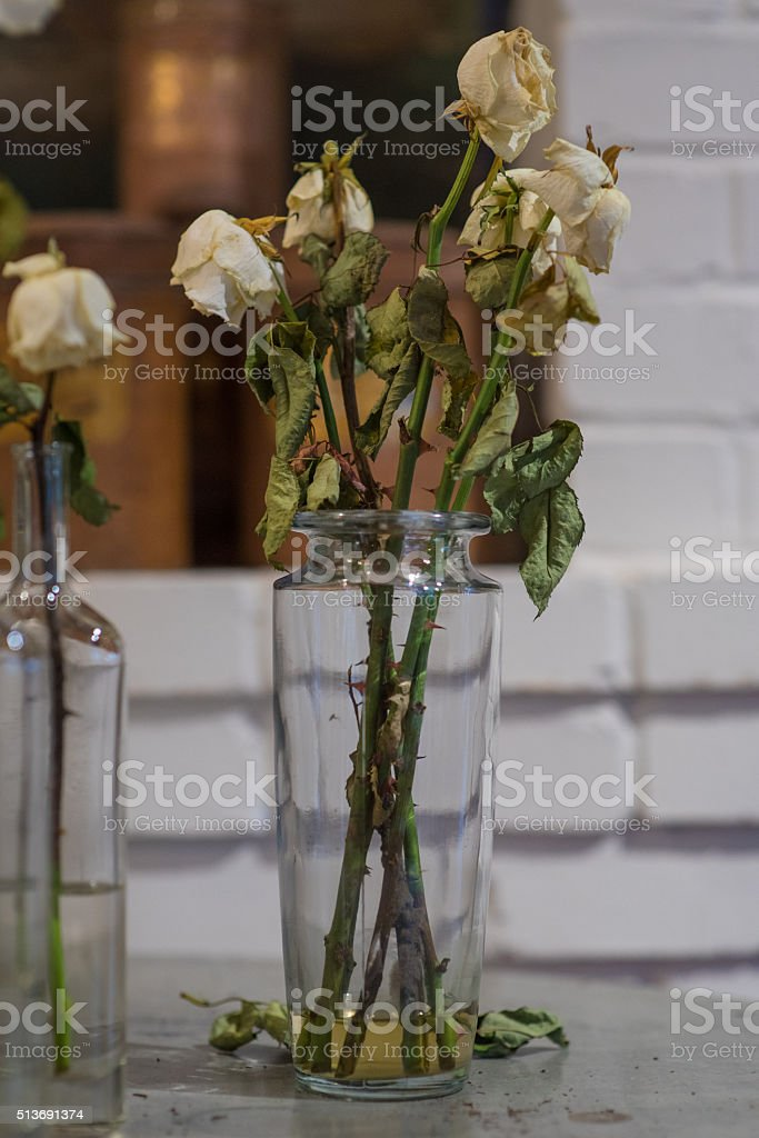 Dead Roses in vase stock photo