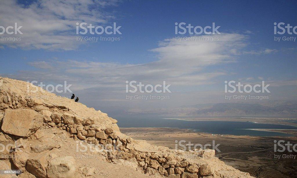 Dead Sea and birds stock photo
