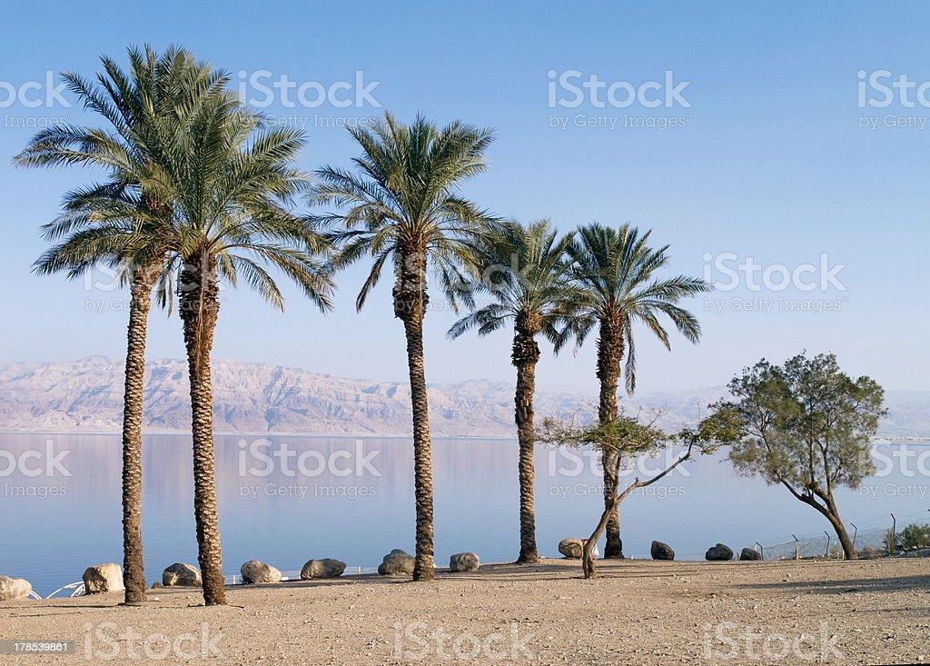 Dead Sea Beach, Israel stock photo