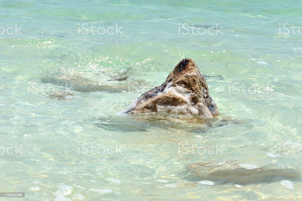 Dead sea salt royalty-free stock photo