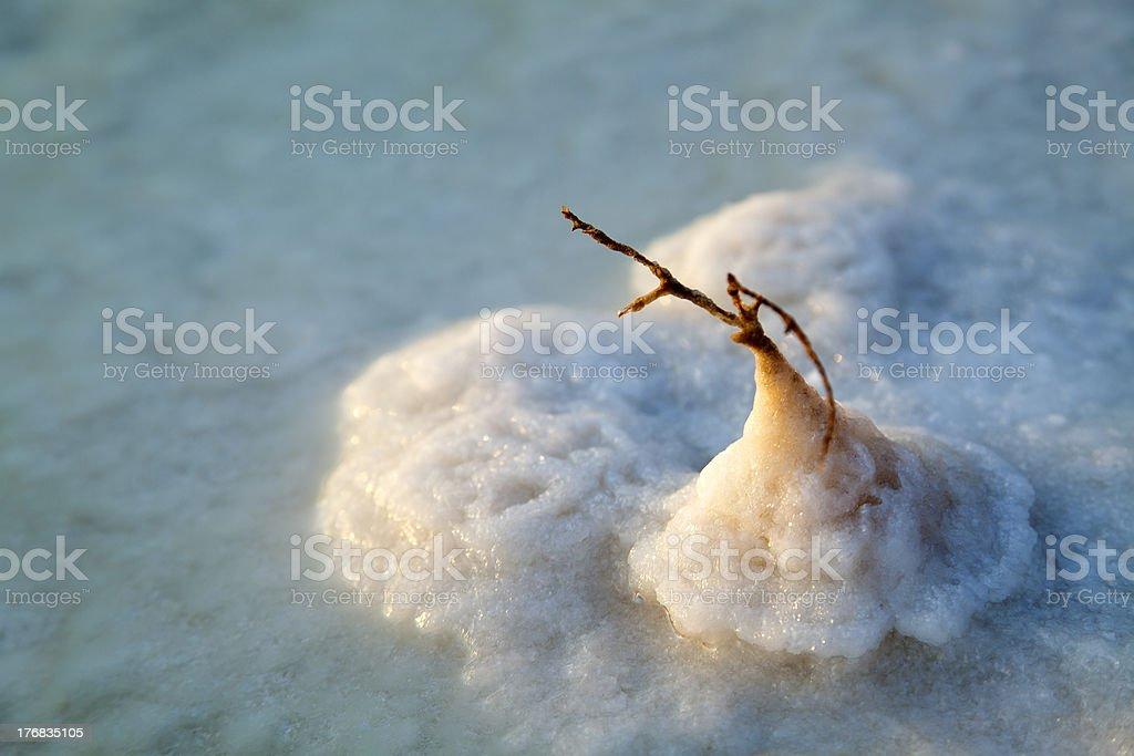Dead Sea - Salt Stem stock photo