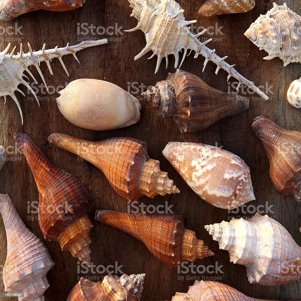 Dead shells royalty-free stock photo
