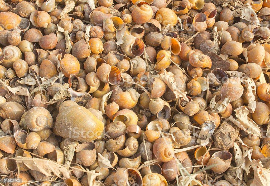 dead shells stock photo