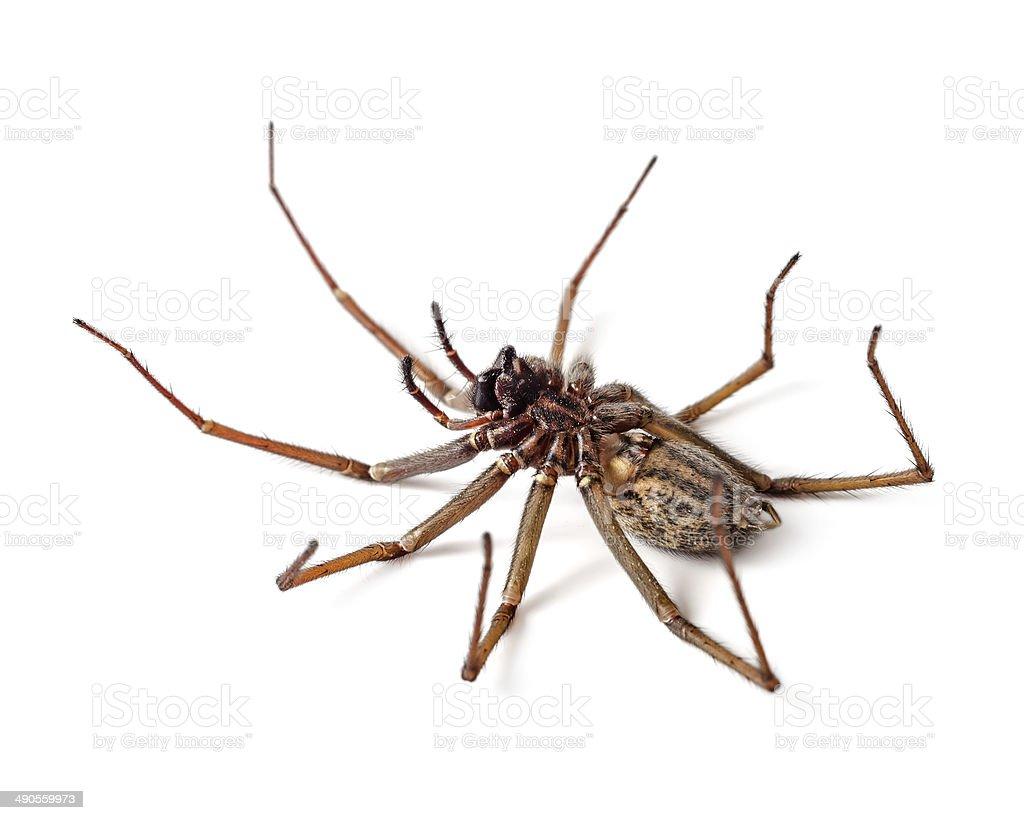Dead spider stock photo