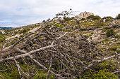 Dead tree after a forest fire, Parnitha Greece