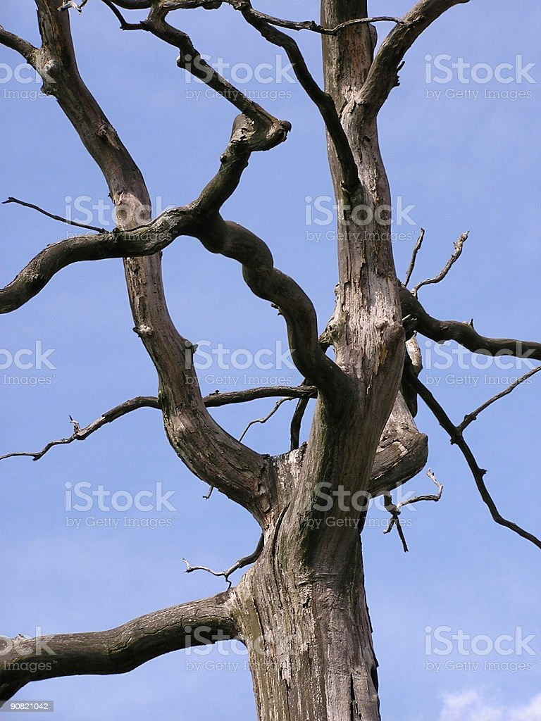 Dead tree after a forest fire royalty-free stock photo