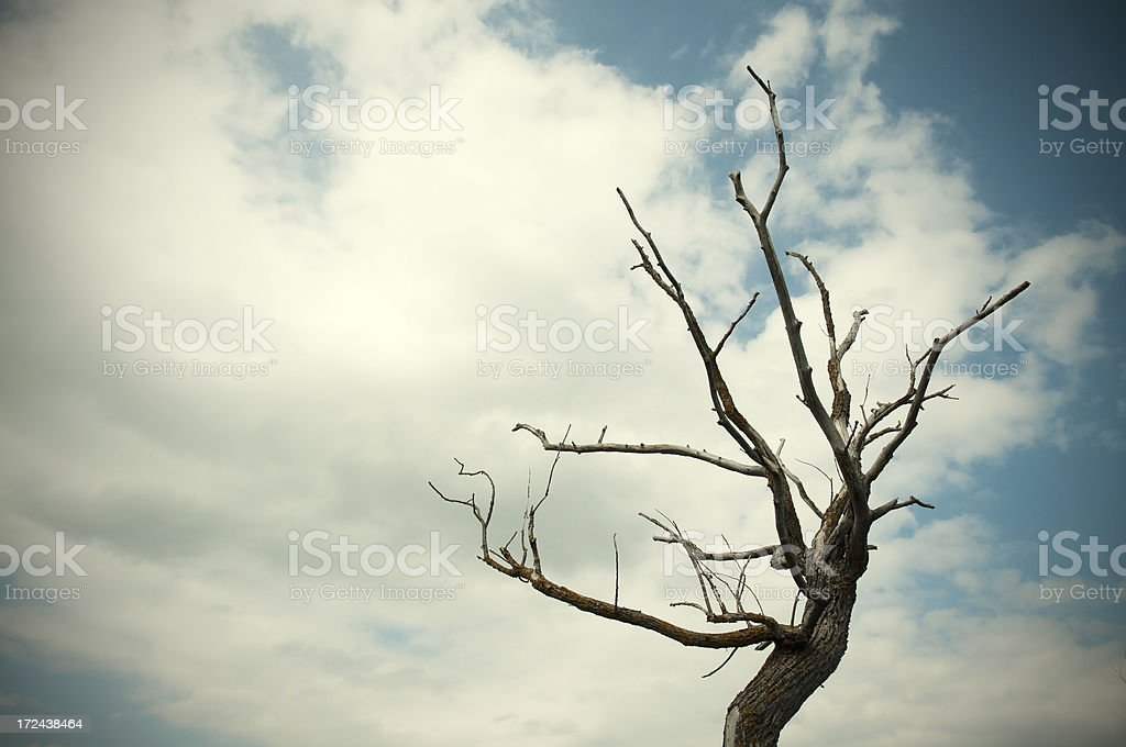 Dead tree against a blue sky royalty-free stock photo