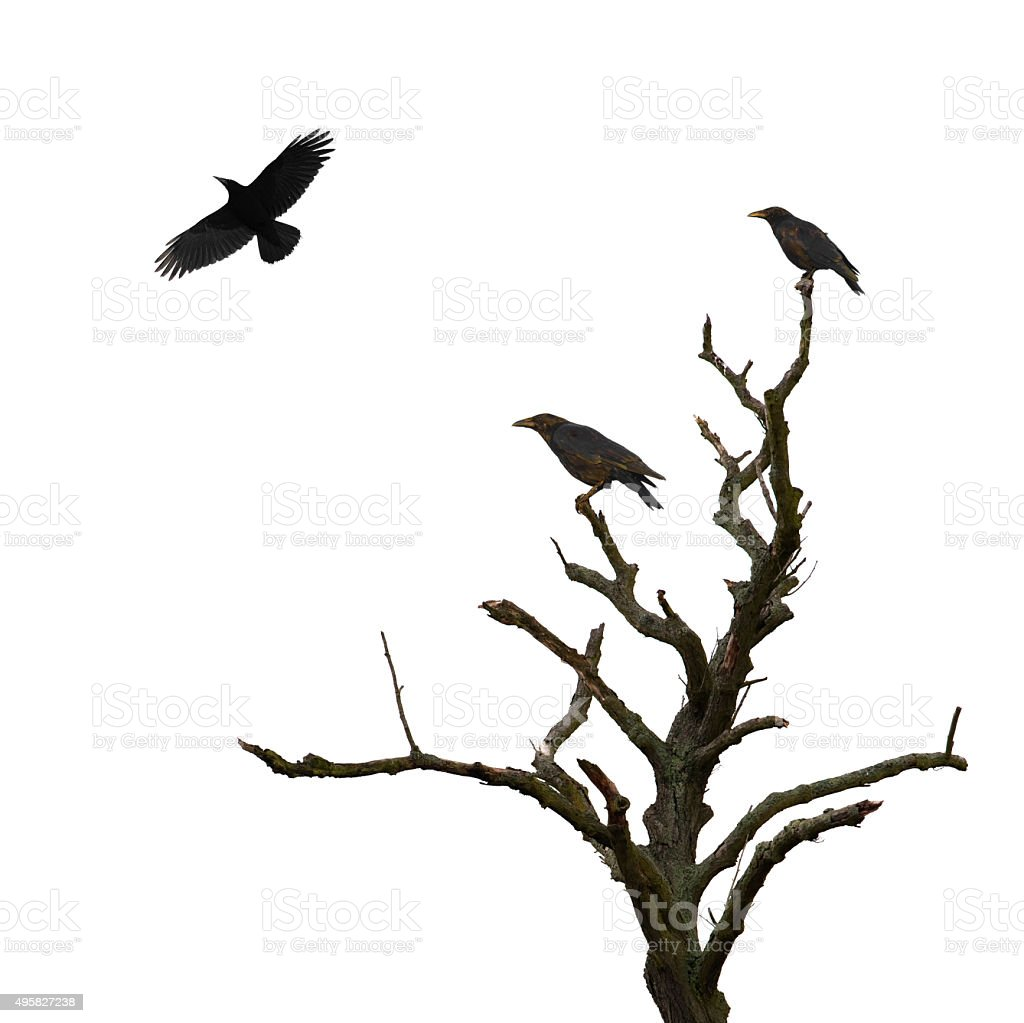 Dead tree and crows stock photo