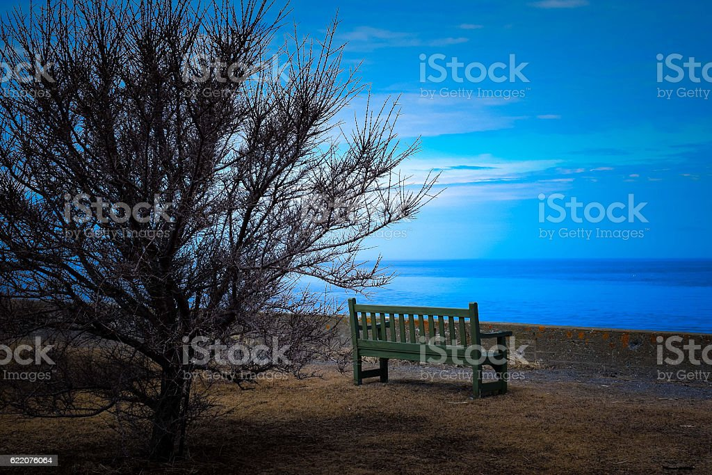 Dead tree and empty seat facing the sea royalty-free stock photo