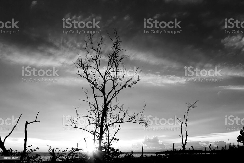 Dead tree and Sun stock photo