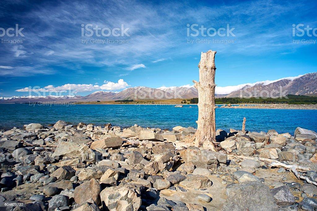 Dead Tree At Lake Tekapo stock photo
