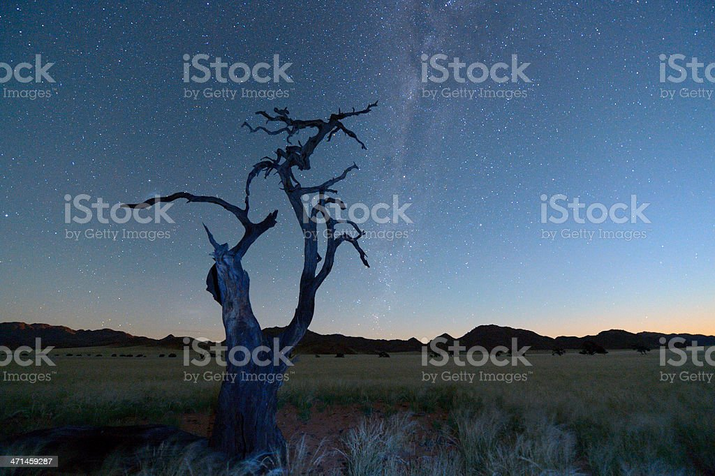 Dead tree at night and the Milky Way royalty-free stock photo