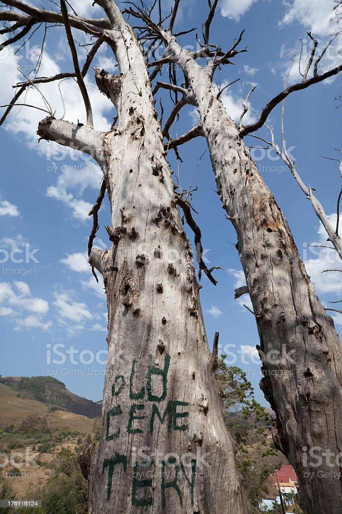 Dead Tree at the Old Cemetry royalty-free stock photo