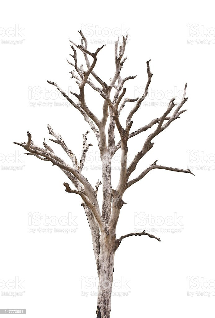dead tree  background royalty-free stock photo