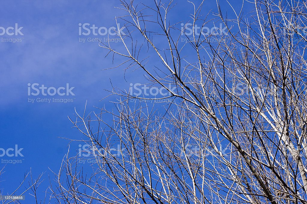 Dead tree branches against a sunny blue sky stock photo