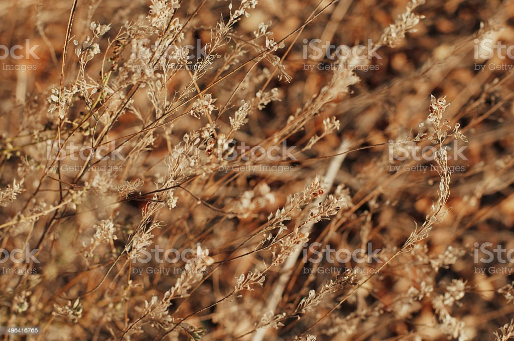 dead tree branches royalty-free stock photo