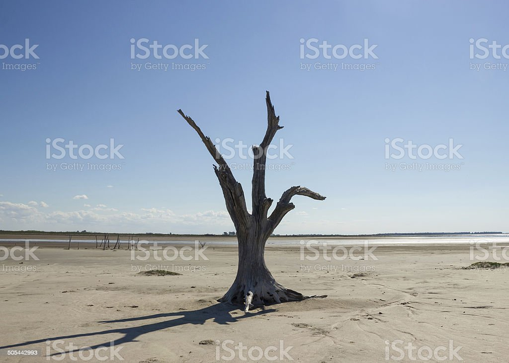 Dead Tree by the Desertification stock photo