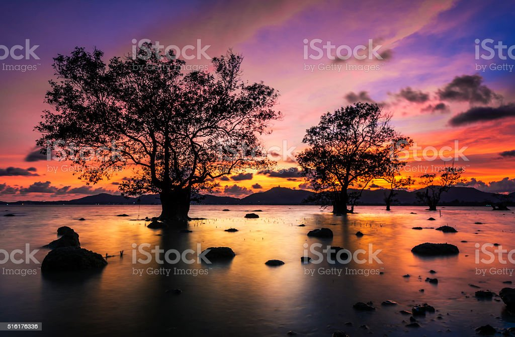 dead tree by the sea with the beautiful morning sun. stock photo
