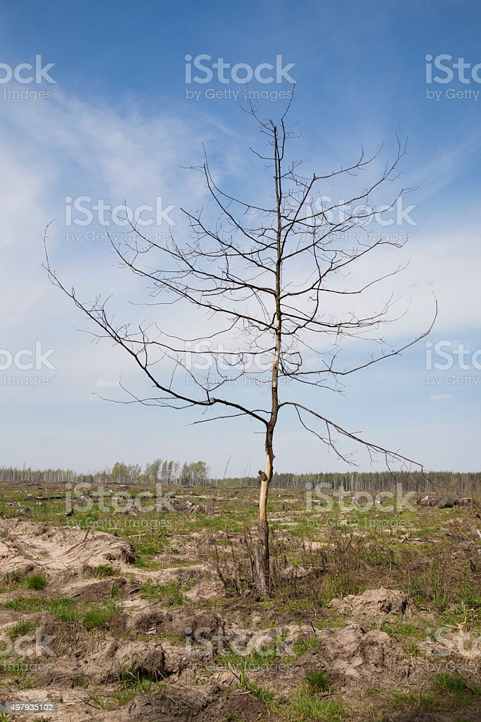 Dead tree in a wasteland stock photo