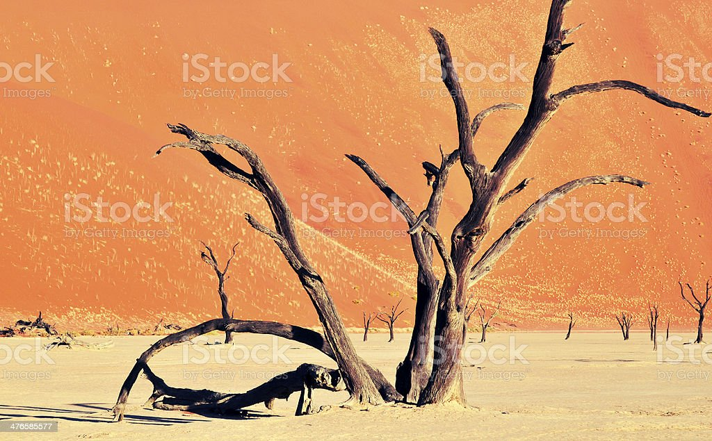 Dead tree in Dead Vlei,Namibia stock photo