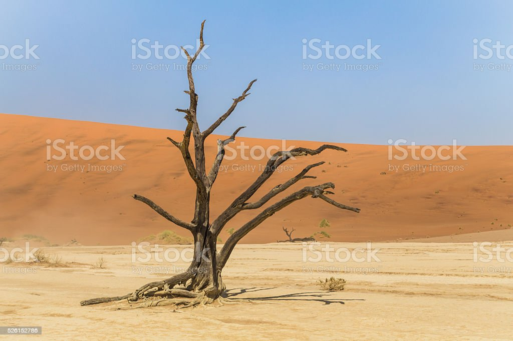 Dead tree in Deadvlei, Namibia stock photo