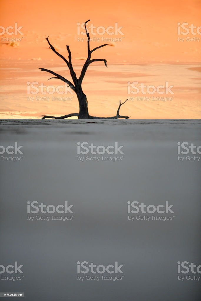 Dead tree in Deadvlei, Namibia. stock photo
