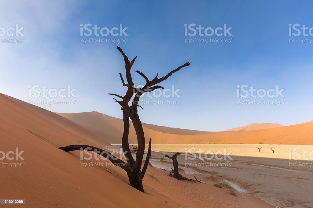 Dead Tree in Dune at Dooievlei stock photo