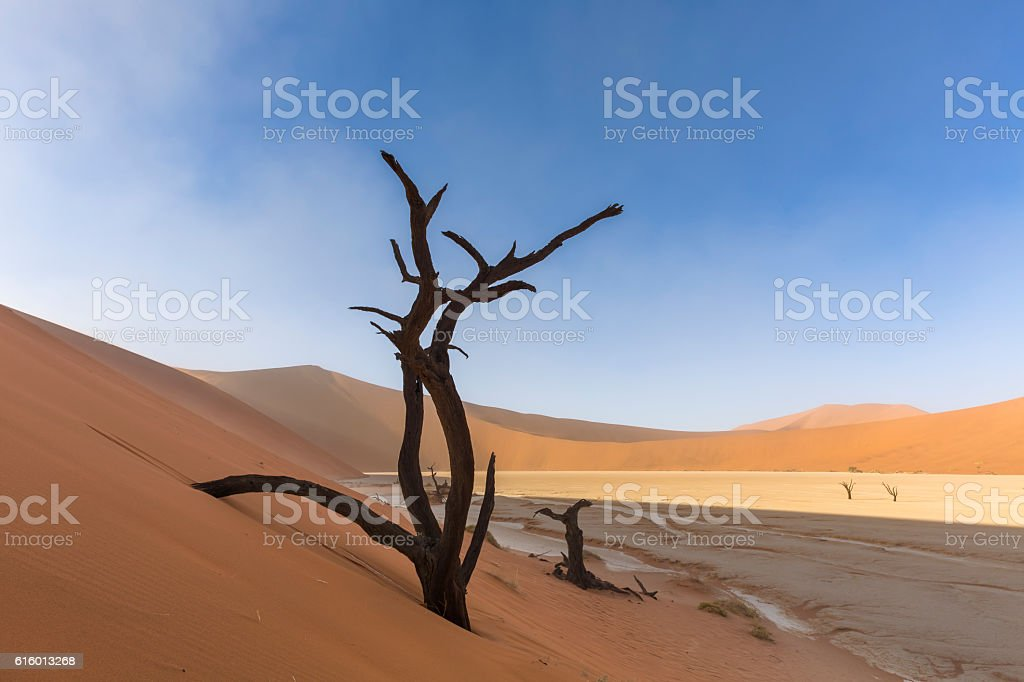 Dead Tree in Dune at Dooievlei stock photo