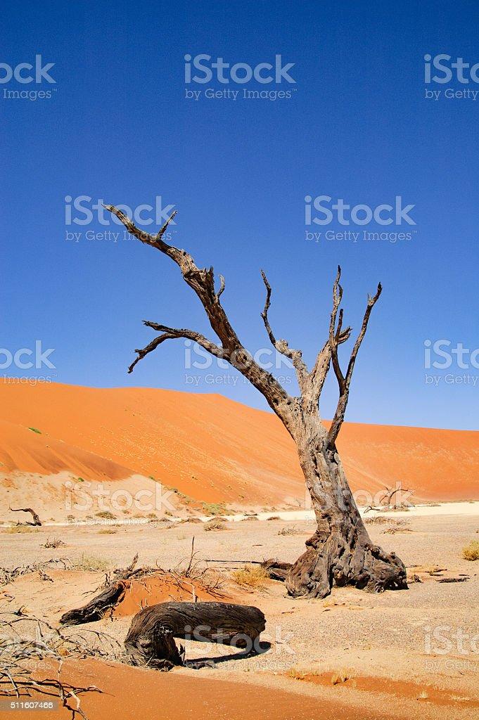 Dead Tree in Hidden Vlei, Namibia stock photo