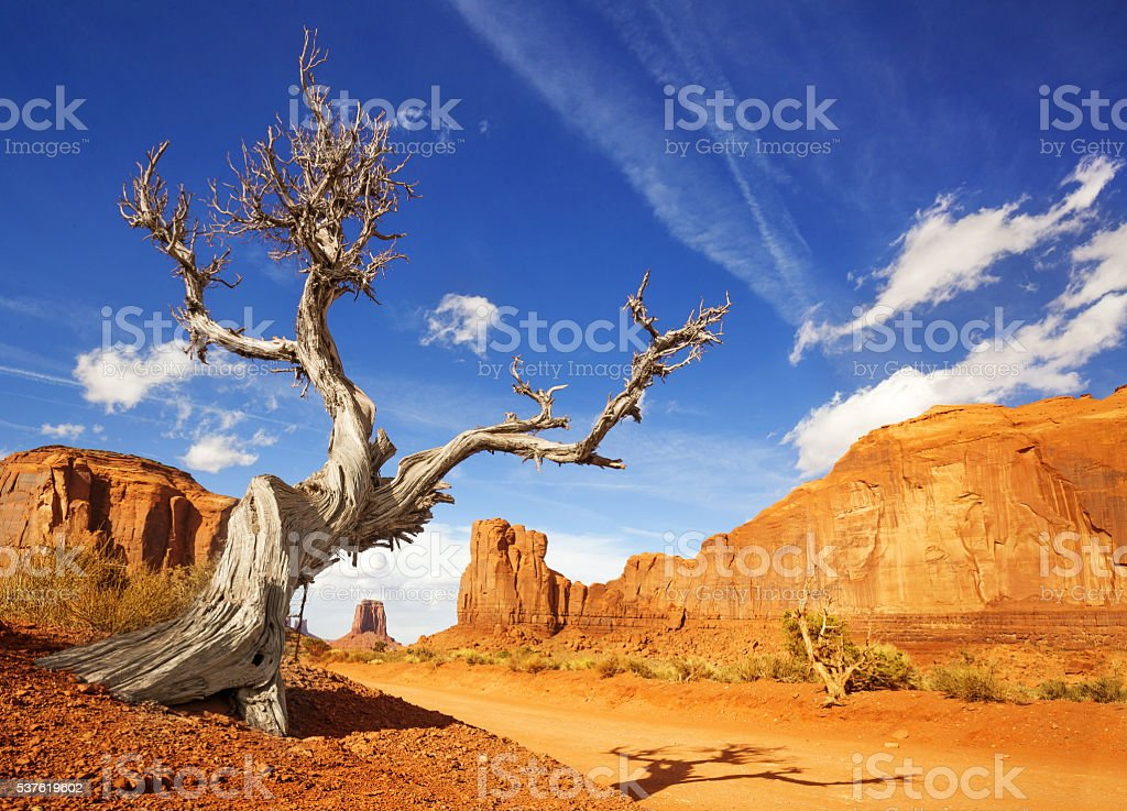 dead tree in monument valley stock photo