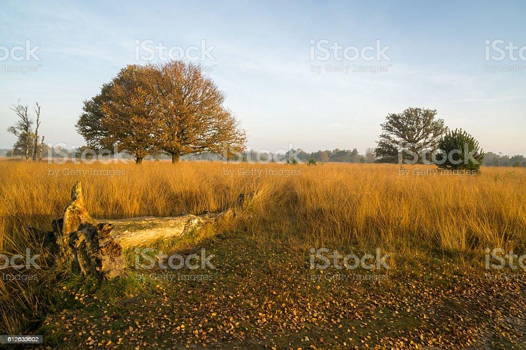 Dead tree in Moorland stock photo