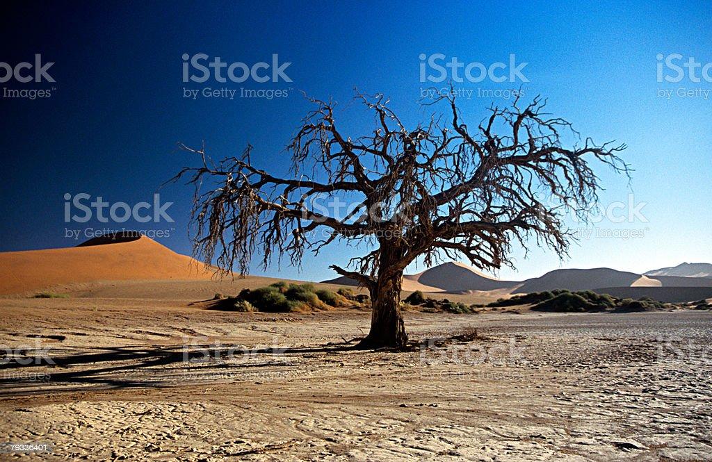 Dead tree in namibian desert stock photo