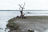 Dead tree in Taungthaman lake in Amarapura, Myanmar.